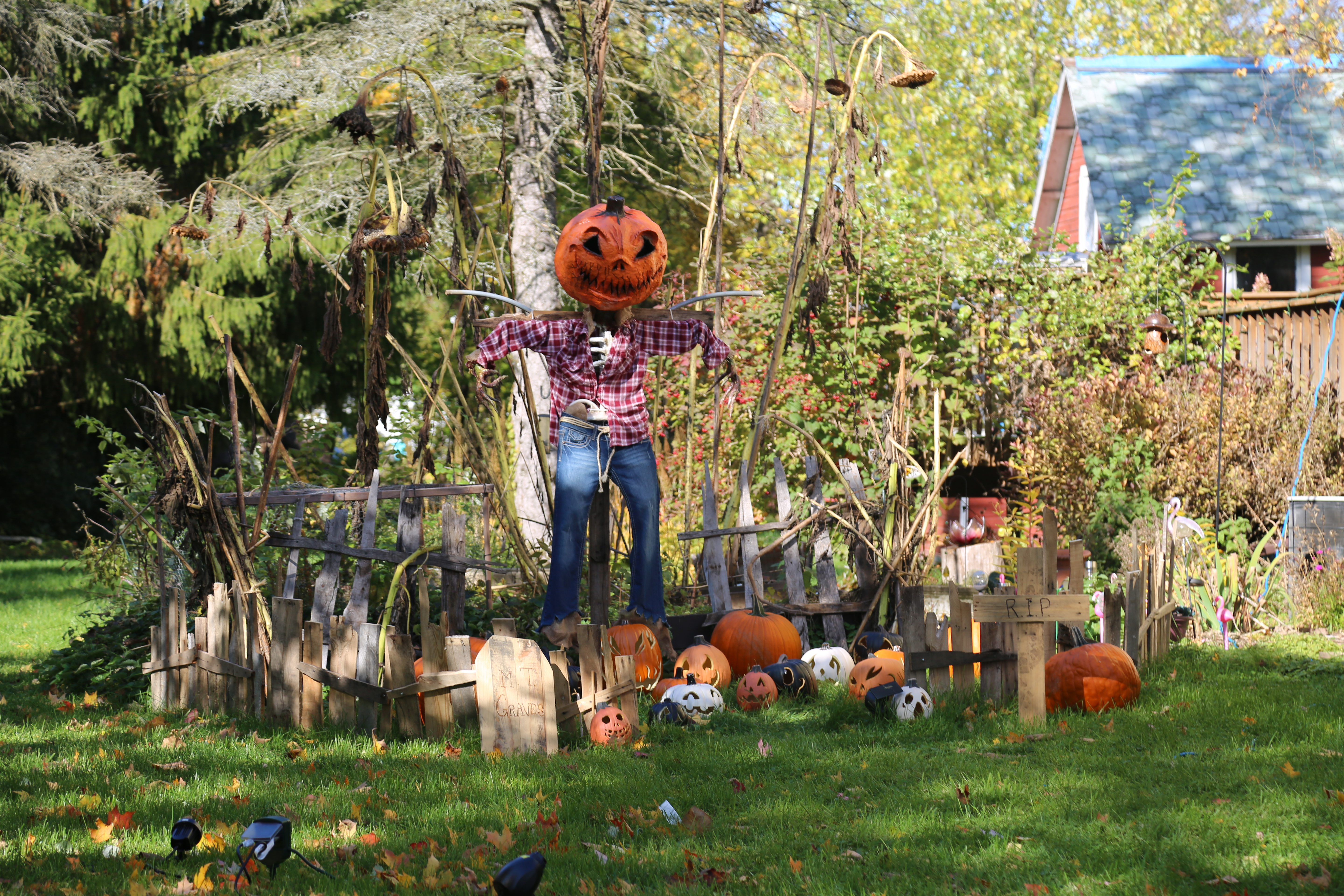 jack o lantern decorations outdoors in a yard