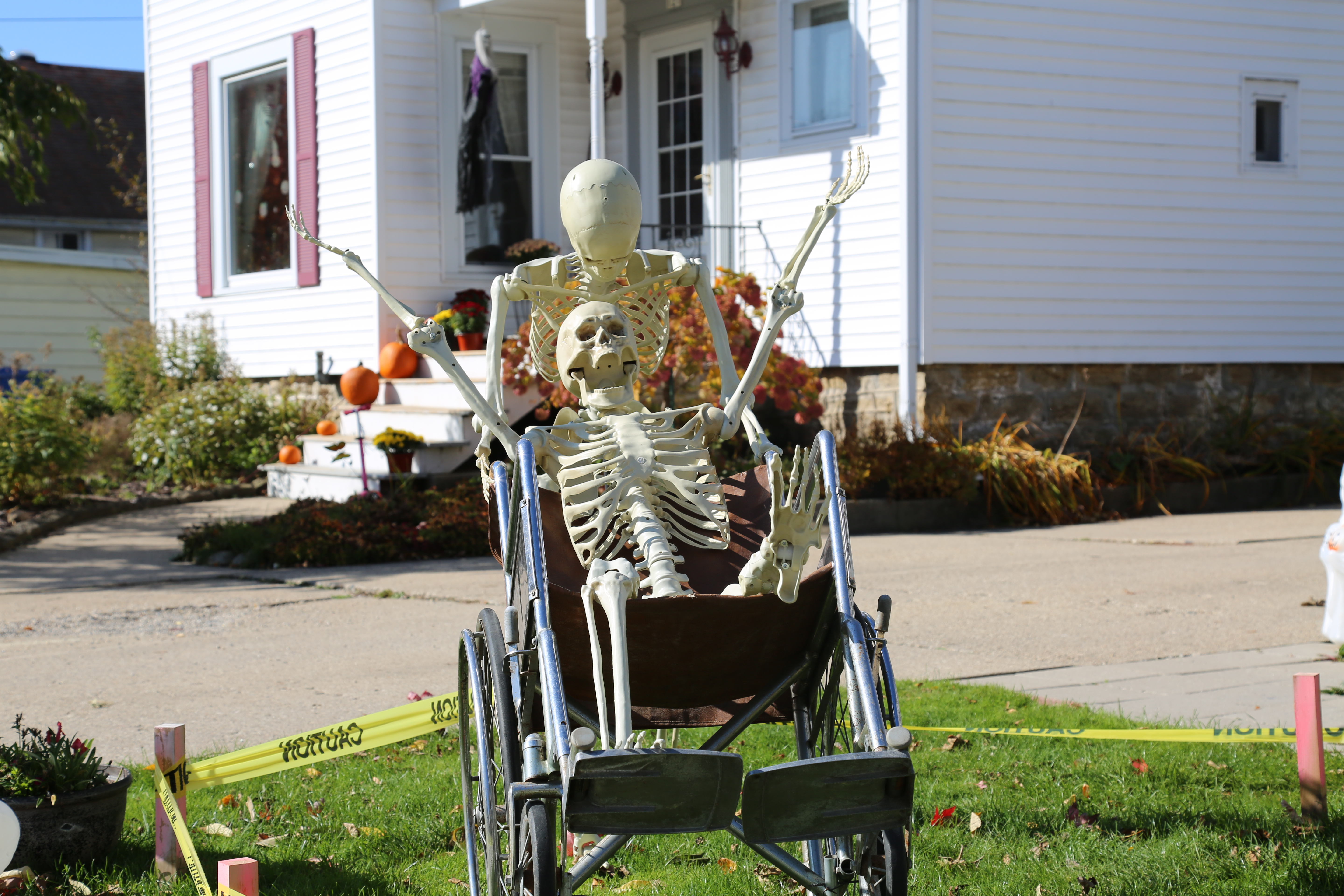 Skeletons posed with a wheelchair